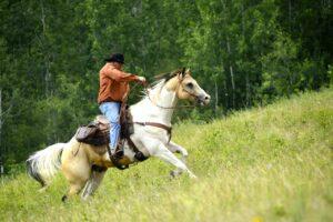 Saskatchewan: Ausritt mit dem Büffel-Cowboy