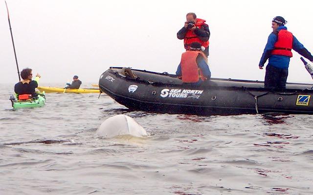 Foto-Shooting mit Walen.