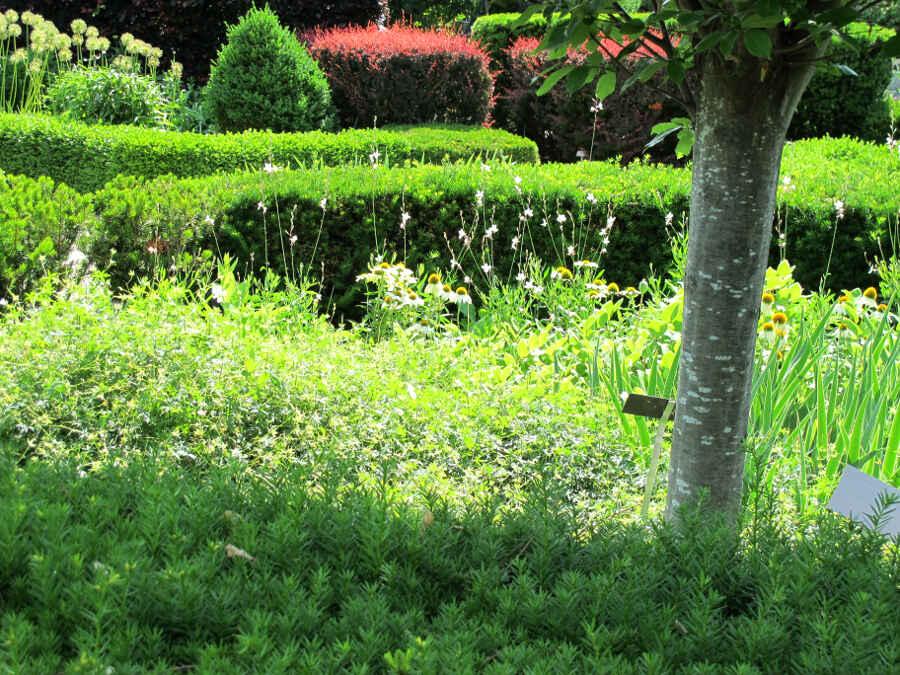 Toronto Botanical Garden 16