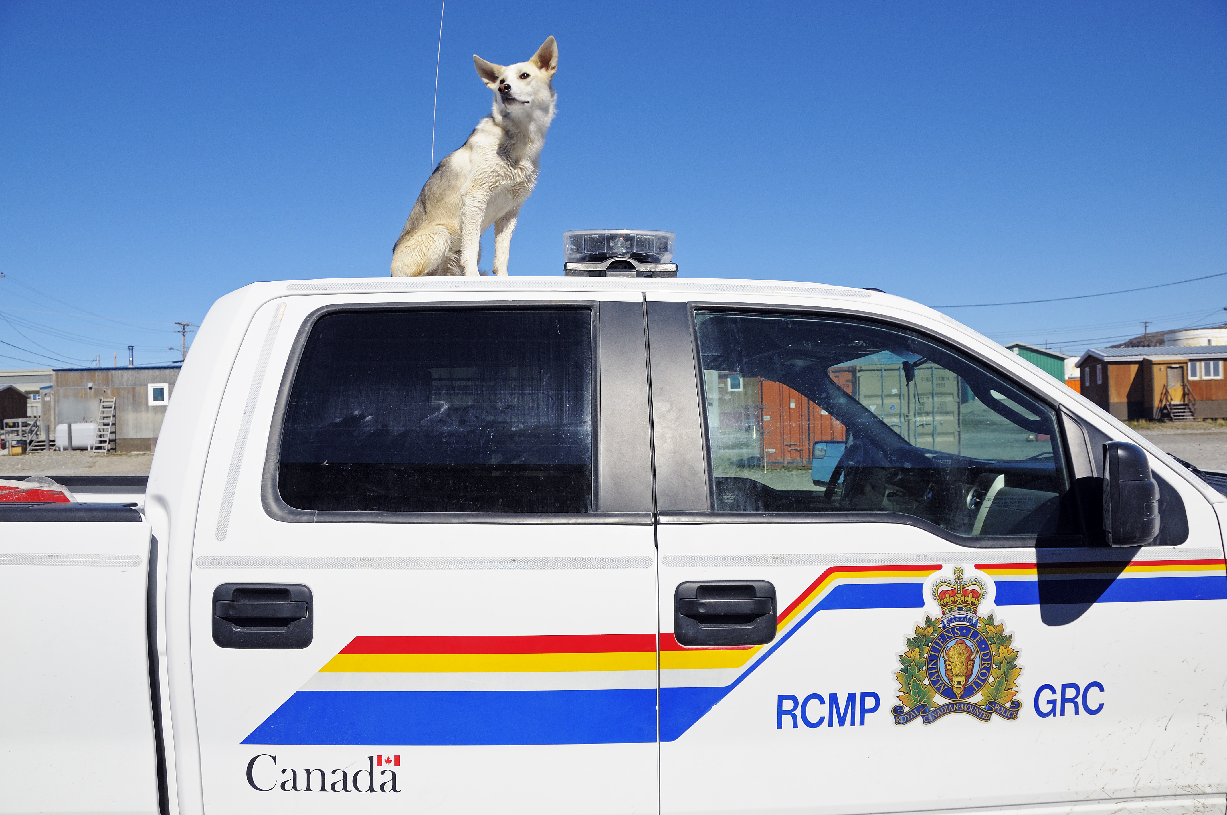 Mischlings-Hund auf einem Auto der Royal Canadian Mounted Police (RCMP), Victoria Island (vorher Holman Island), Dorf Ulukhaktok, Northwest Territories, Kanada, Amerika